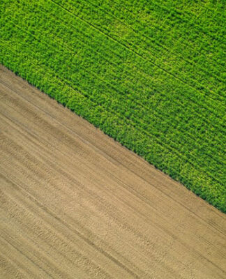Negatywne skutki występowania chwastów w uprawach rolnych